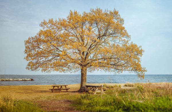pretty tree on the beach in annapolis