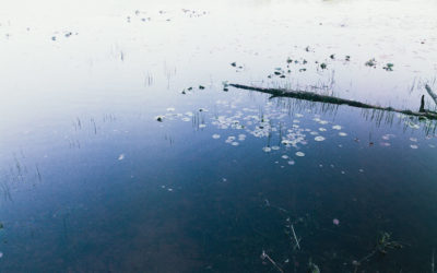 Drifting, Light Leaks, and Accidental Frames Through June